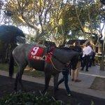 Image for the Tweet beginning: Un día en las carreras