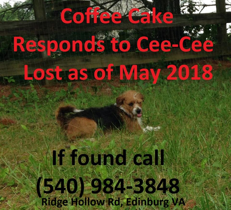#Lostdog Coffee Cake, responds to CeeCee is a poodle mix with beagle like markings. She is around 6-7 years old and was a bit chubby when she went missing. I currently live in Texas and C-C was staying with my grandmother in Edinburgh VA when she went missing last May (May 2018). <br>http://pic.twitter.com/A2G2EXrDCm