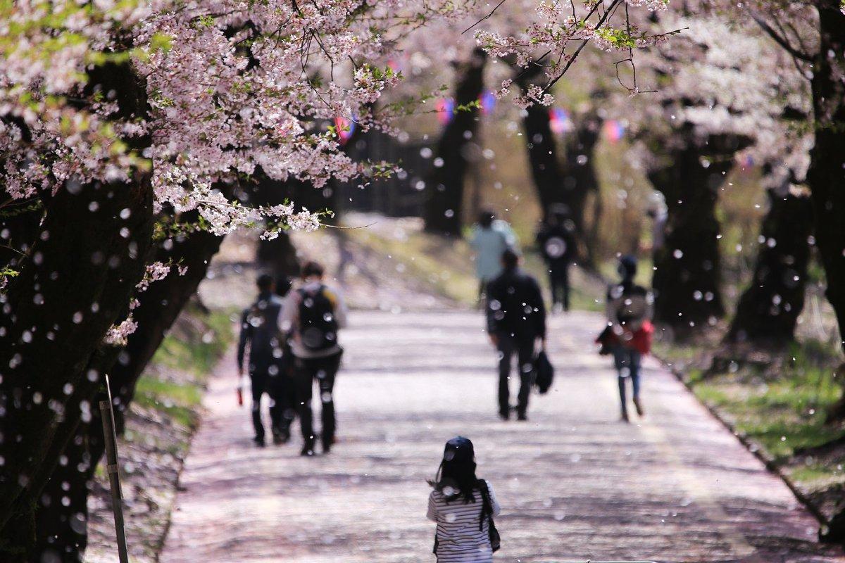 きめ つの や い ば の 千本 桜