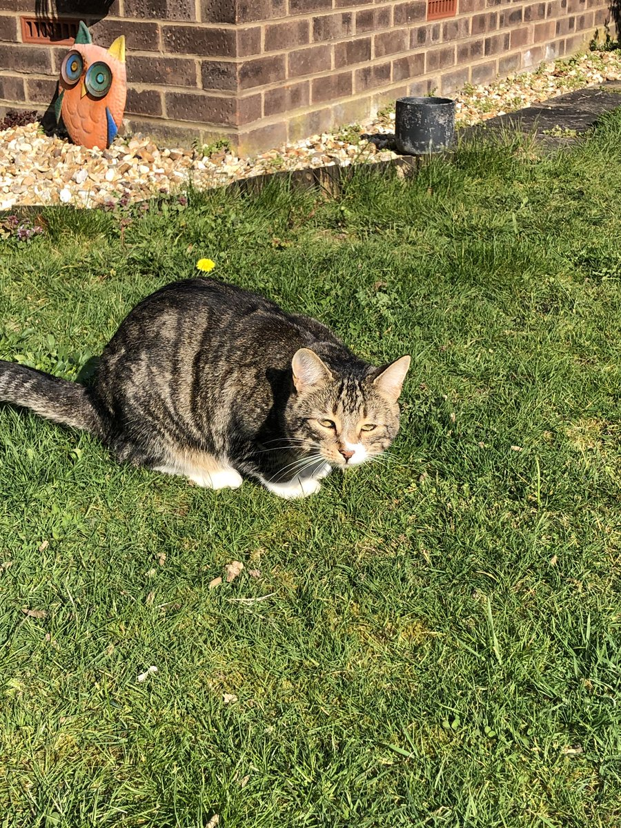Two outdoor baked Easter loaves on this sunny  #KittyLoafMonday #EasterMonday  have a wonderful day all!  #CatsOfTwitter #MondayMotivation #cats #easter <br>http://pic.twitter.com/7gOWA3NISI