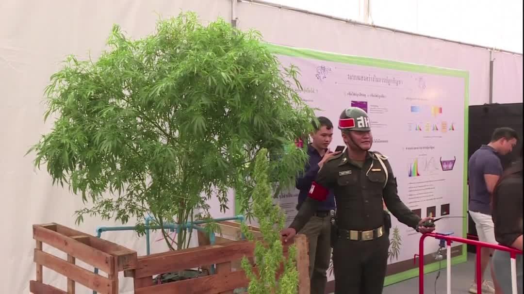 泰国首场大麻嘉年华 民众蜂拥入场重新认识