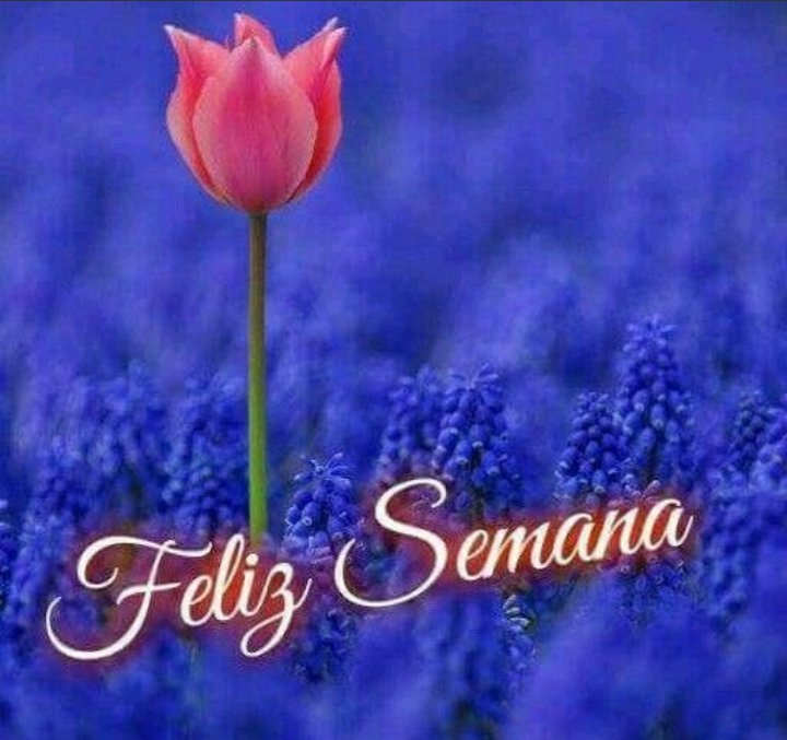 SANDRA's photo on #FelizSemana