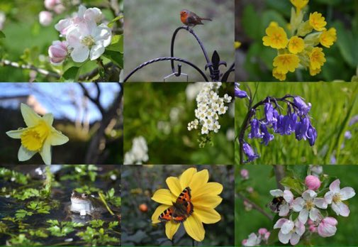 Please help wildlife by ensuring your garden or community has some of these nature-positive features:  Nectar-rich flowers, wildflowers  Pond  Bug hotel, wild area, long grass  Fruit tree  Native tree, hedgerow  Veg bed, compost  Birdfeeder, birdbath, nestbox <br>http://pic.twitter.com/OV8VGkY5Ot