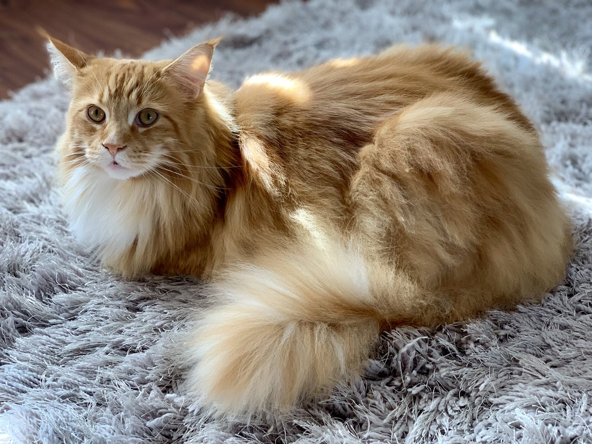 Buddy has baked up another spectacular loaf for #kittyloafmonday! Have a happy #EasterMonday everyone!  #teamfloof<br>http://pic.twitter.com/EuGtkmusEM
