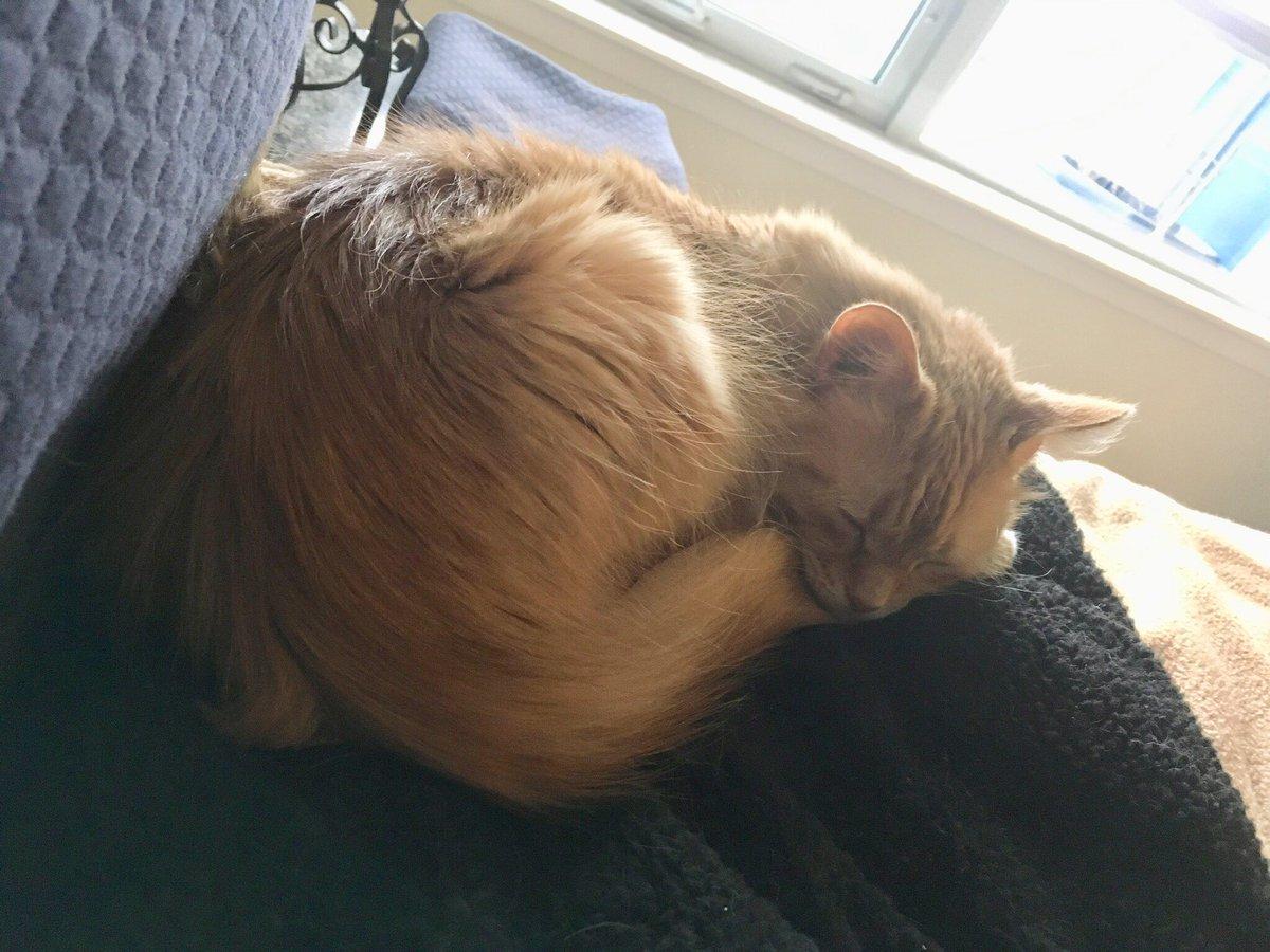 Using the sunshine  to slowly proof my Kaiser bun on #KittyLoafMonday <br>http://pic.twitter.com/u9l9E4BBdK