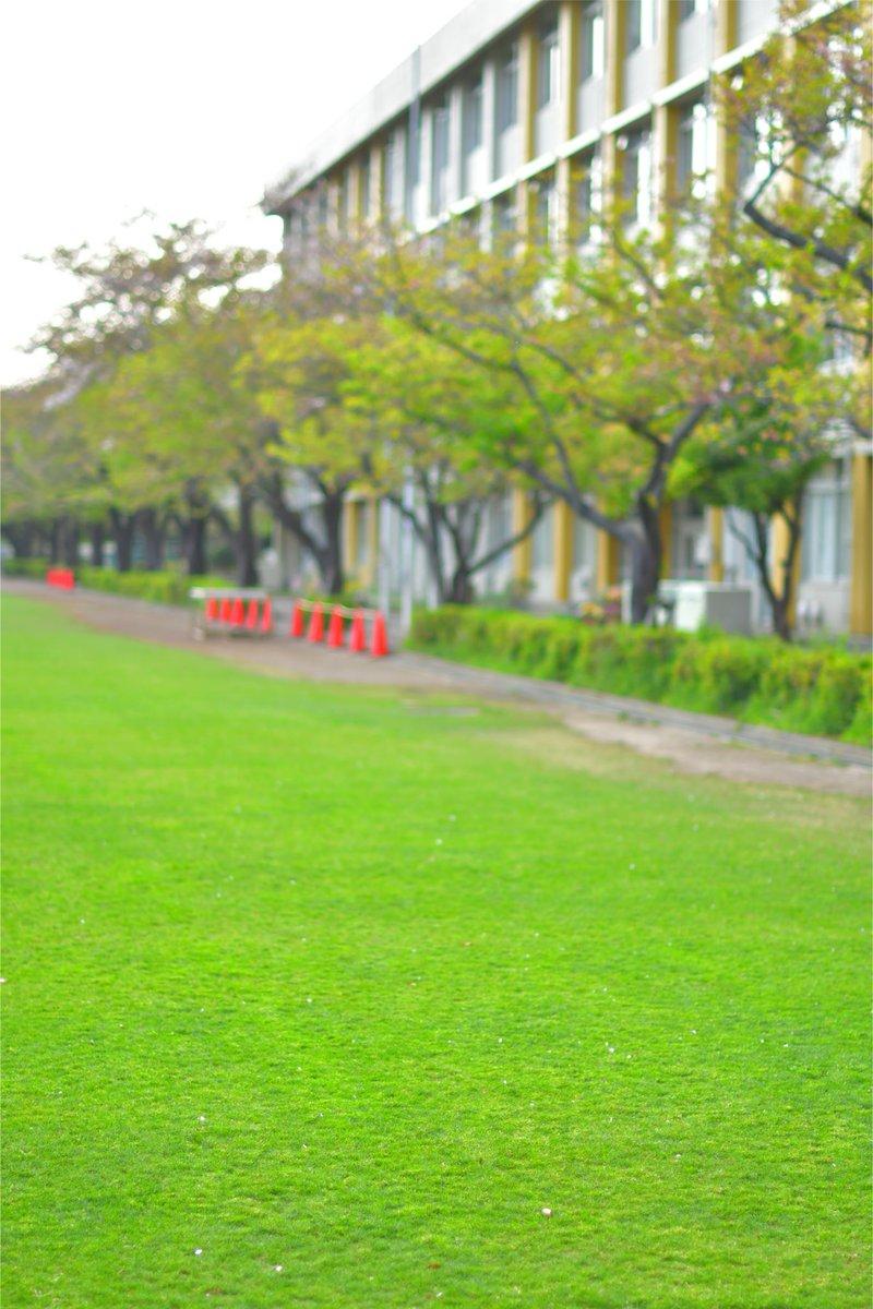 は 隣 の 青い 芝生 なぜ隣の芝生は青く見える?心理と解決法