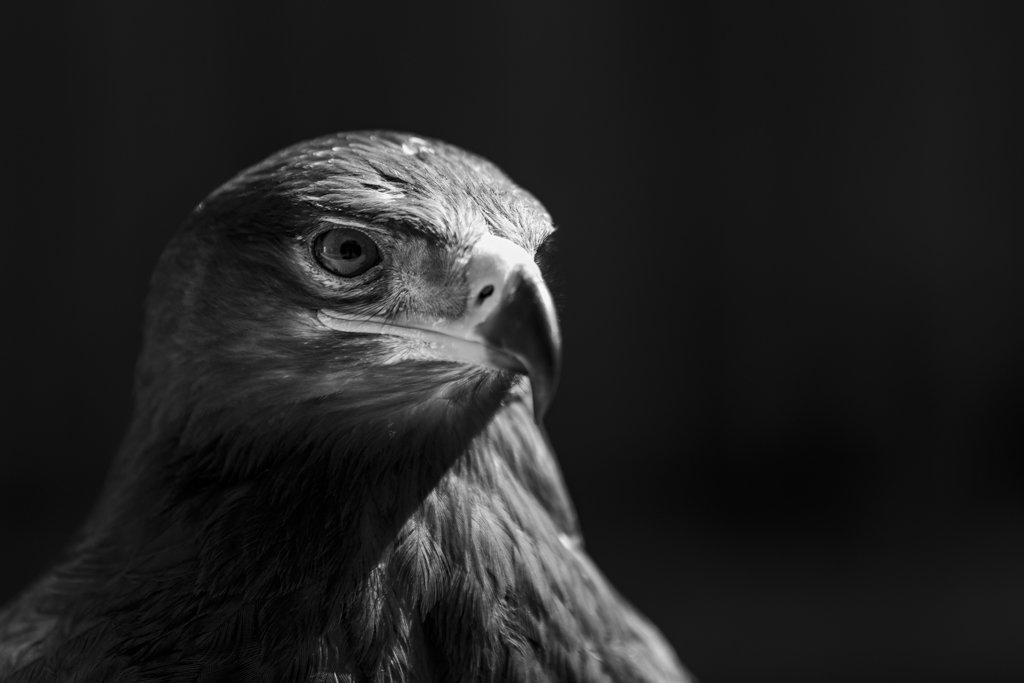 Lawrence Smith's photo on #WexMondays