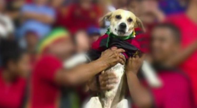 Torcedor do Sport e cachorro dele são agredidos por torcida rival