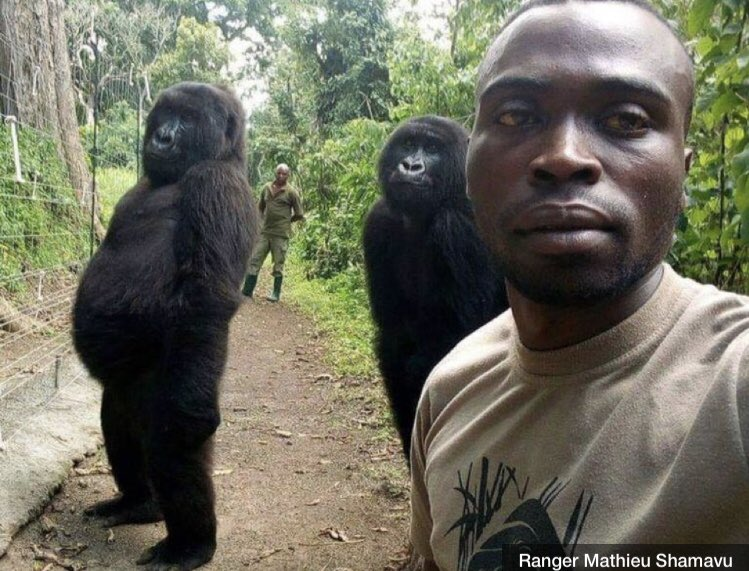 Selfie culture has now spread to animals. World's fucked.