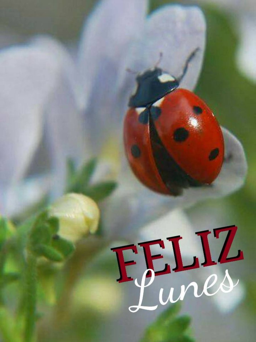Elena Miranda V.🌹🌹's photo on #FelizSemana