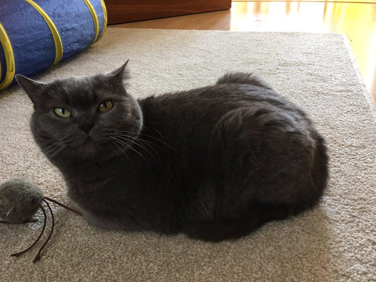 I loaf #KittyLoafMonday <br>http://pic.twitter.com/DIJlyETiJj