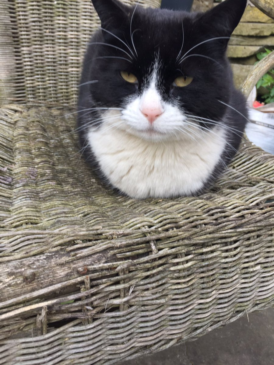 Happy #KittyLoafMonday from Felix. First I've I've seen him do. Picked the tattiest chair in the garden - would've thrown it by now but he likes it.  <br>http://pic.twitter.com/aJmZRSggE7