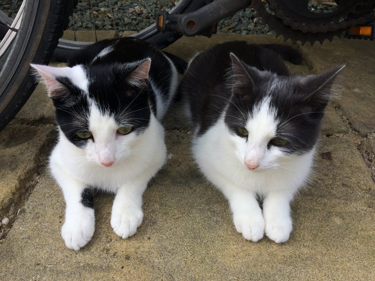 A rare photo of us both semi-loafing today. We hope you've all had a lovely Easter  #KittyLoafMonday #AdoptDontShop<br>http://pic.twitter.com/TnZvjr3Lon