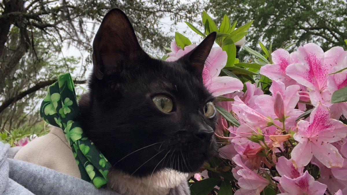 Take time to enjoy the little things even on a Monday! #monday #Mondaythoughts #flowers #cat #bowtie<br>http://pic.twitter.com/FJAAdM3Q7q