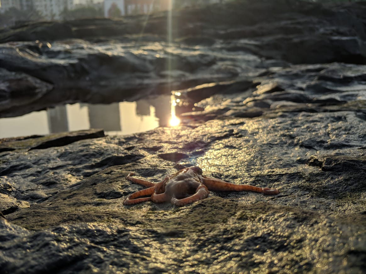 #EarthDay | How a growing number of people are discovering Mumbai's unlikely link to the wild, afloat and alive. By @nehaa_sinha in #BQOpinion.  Read: https://blmgqt.news/earth-day-24a56