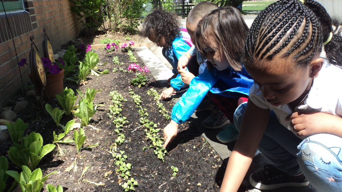After spring break preks saw radish seeds sprouting. It was fun to observe and water them. We also pulled out weeds. <a target='_blank' href='http://twitter.com/CampbellAPS'>@CampbellAPS</a> <a target='_blank' href='http://twitter.com/APS_EarlyChild'>@APS_EarlyChild</a> <a target='_blank' href='http://twitter.com/CampbellOutside'>@CampbellOutside</a> <a target='_blank' href='http://twitter.com/AFACfeeds'>@AFACfeeds</a> <a target='_blank' href='https://t.co/HQV7oVNvrb'>https://t.co/HQV7oVNvrb</a>