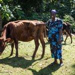 Image for the Tweet beginning: Meet Clementine. A #Kenyan smallholder
