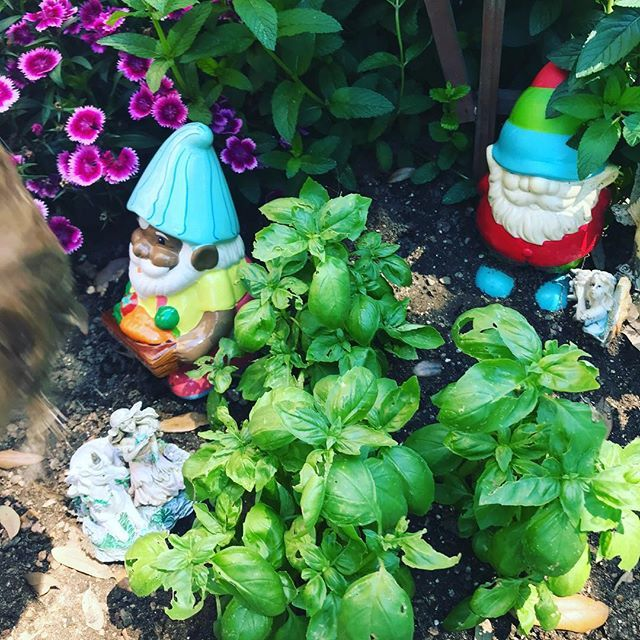 There's nothing like hanging out with garden gnomes on a nice spring day after a work out 💪 #teacherselfcare #selfcarethreads #teacherlife #teachersofinstagram #iteachfirst #iteachk http://bit.ly/2Vdbbdq