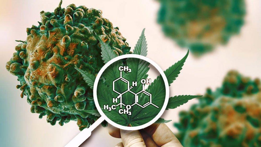 医学研究证实大麻可以治愈16种癌症