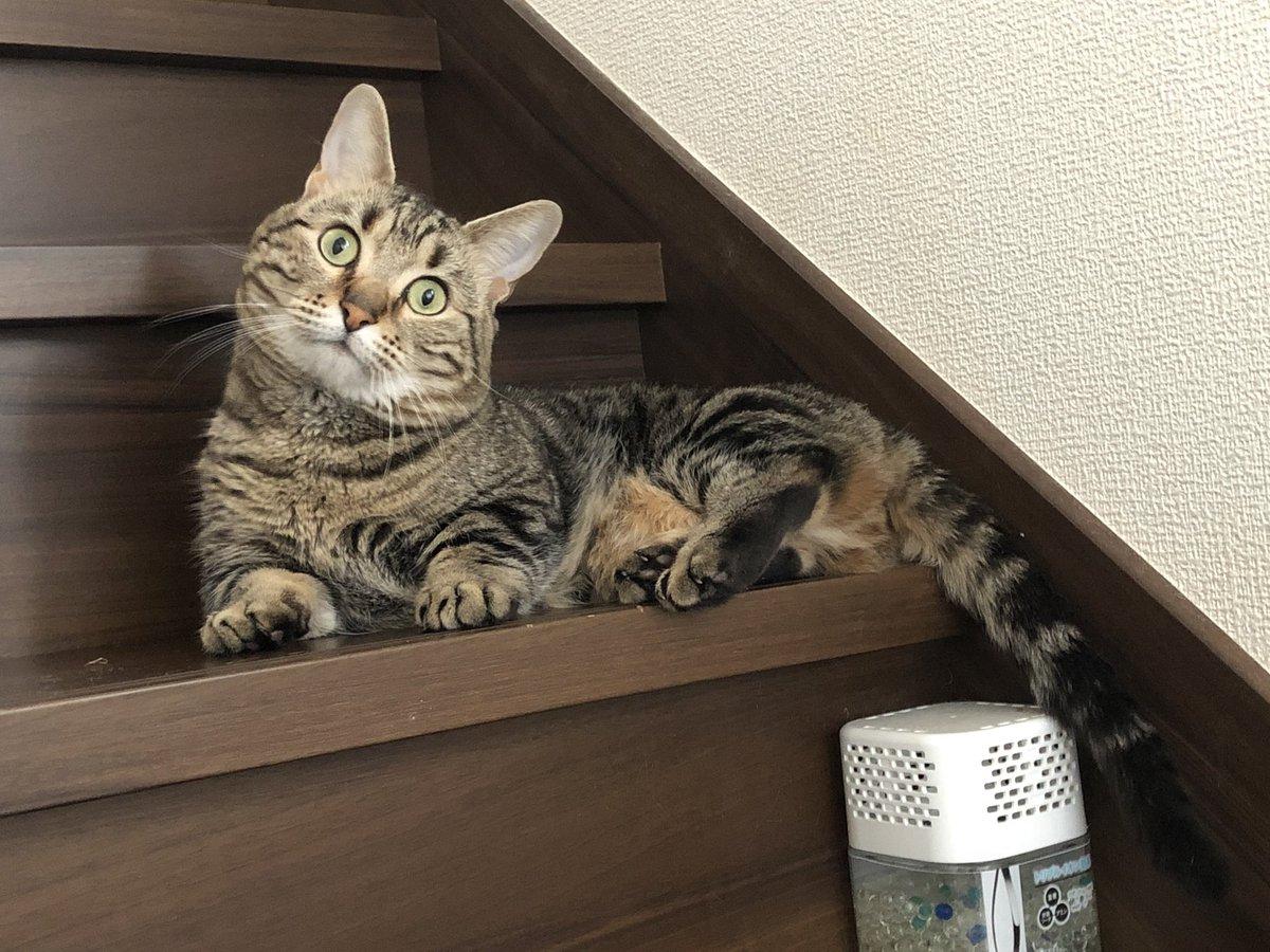 Twitterの広告がゲーム業界転職ナビからメガドラミニに入れ替わってる事に気付いたネコちゃんの顔