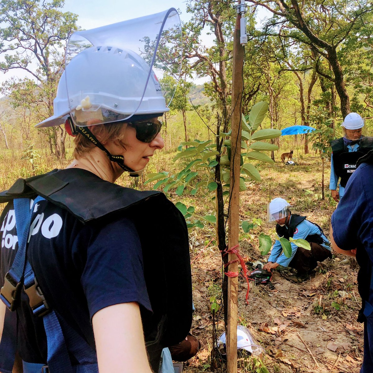 Another day in the field with @herorats near #PrearVihear #temple close to the #Thailand #Cambodia border. The 2008 #conflict left the site littered with #Landmines & #uxo. A #danger to the locals, those restoring the temple & visitors. #savelives #humanitarian #rats #minefield