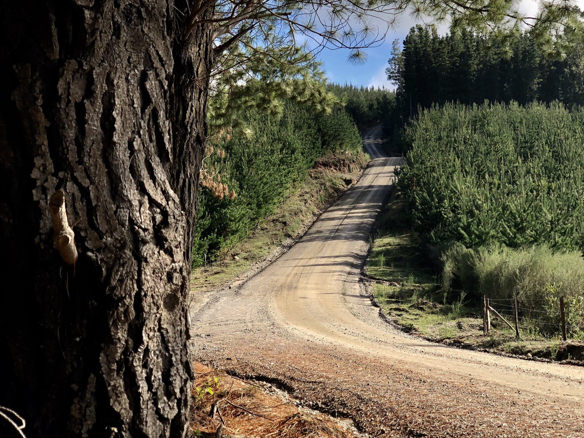 WRC: COPEC Rallye Chile [9-12 Mayo] D52W8qOWAAAVRcF