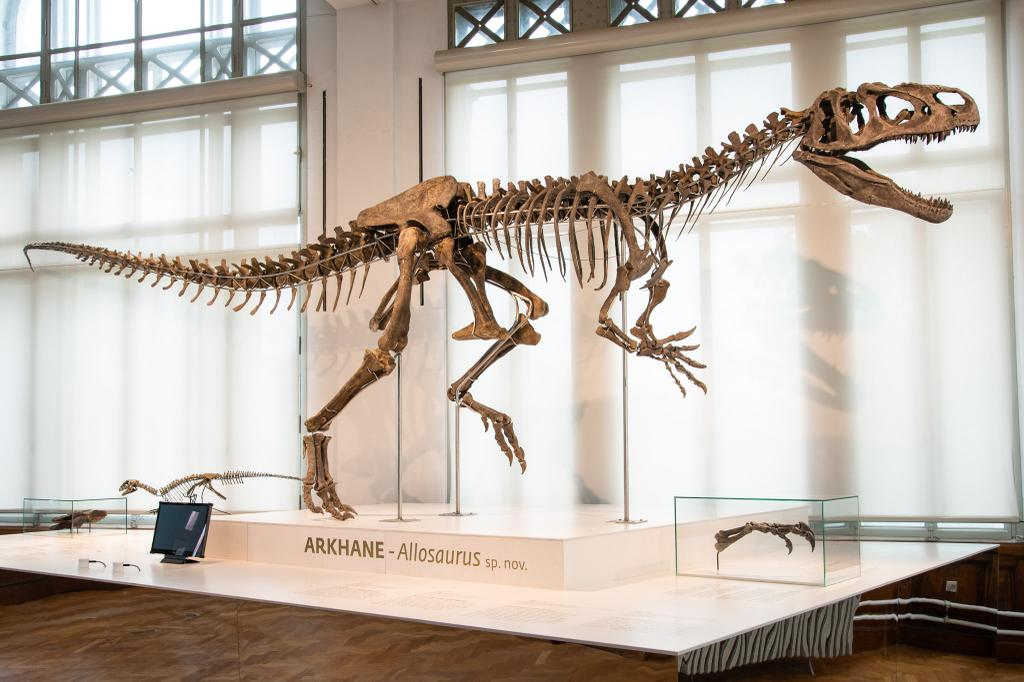 In ✨ world premiere ✨ at @RBINSmuseum: 'Arkhane', the new Jurassic #dinosaur! This authentic, 8.7 metre long and 70% complete skeleton from Wyoming (US) belongs to a new Allosaurus species, according to our palaeontologists who studied the specimen. #newdinobrussels