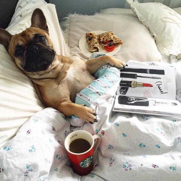 Картинки доброе утро животные суббота