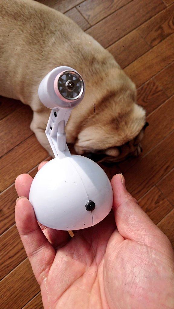 test ツイッターメディア - キャンドゥ に売ってる卓上扇風機で ベアリング慣らし機作りました #mini4wd  #ミニ四駆  #キャンドゥ https://t.co/xvDFLgyQeS