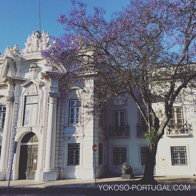 test ツイッターメディア - 昨日は30度近くまで上がった気温で、リスボンの軍事博物館前のジャカランダは、只今3分咲です。 #ポルトガル #リスボン #ジャカランダ https://t.co/OaRsJUzzd8