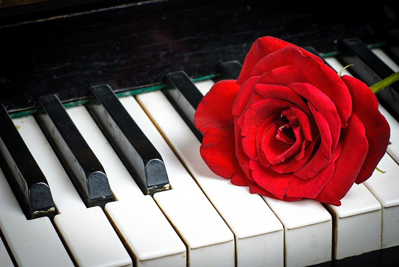 Открытка с клавишами рояля, картинки рукодельницами крутые