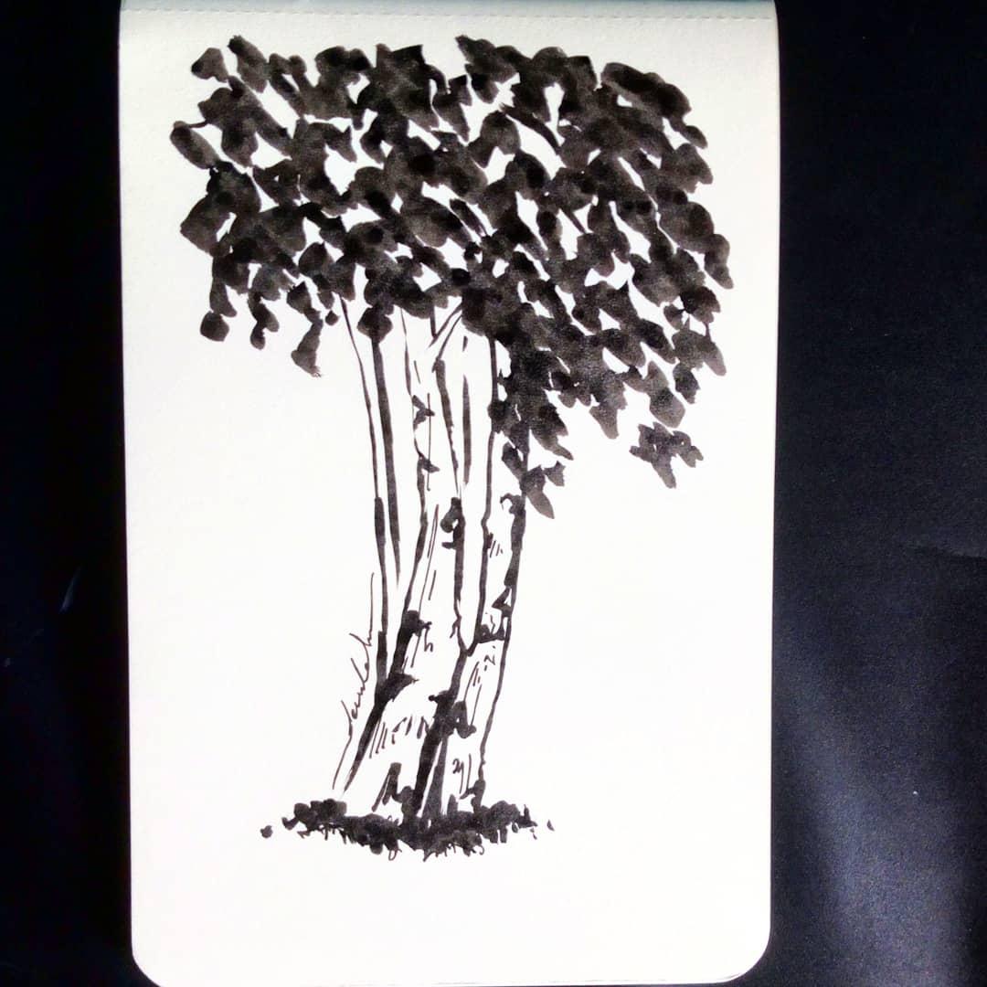 Birch trees #dailyart #dailyillustration #trees #nature #blackandwhitedrawing https://t.co/m0f2TKUf5J