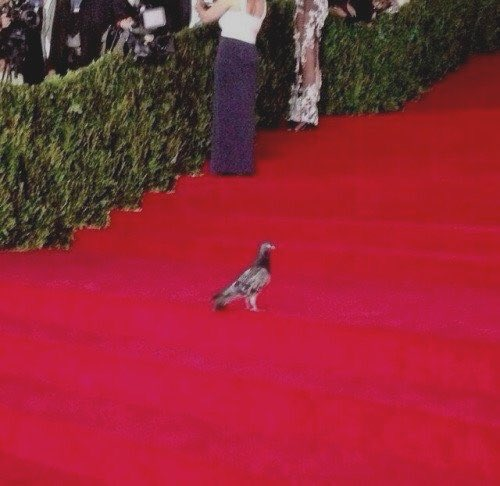 Who was better dressed at the #MetGala? RT for pigeon, like for James Charles