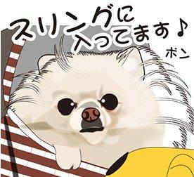 ポンちゃんです~(*^_^*) #犬 #イラスト #ポメラニアン #募集 #仕事 #転職