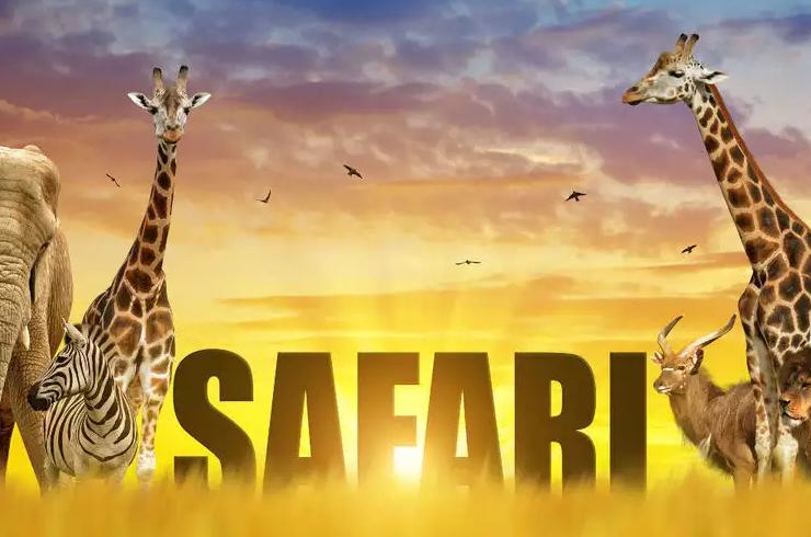 nk_safari photo