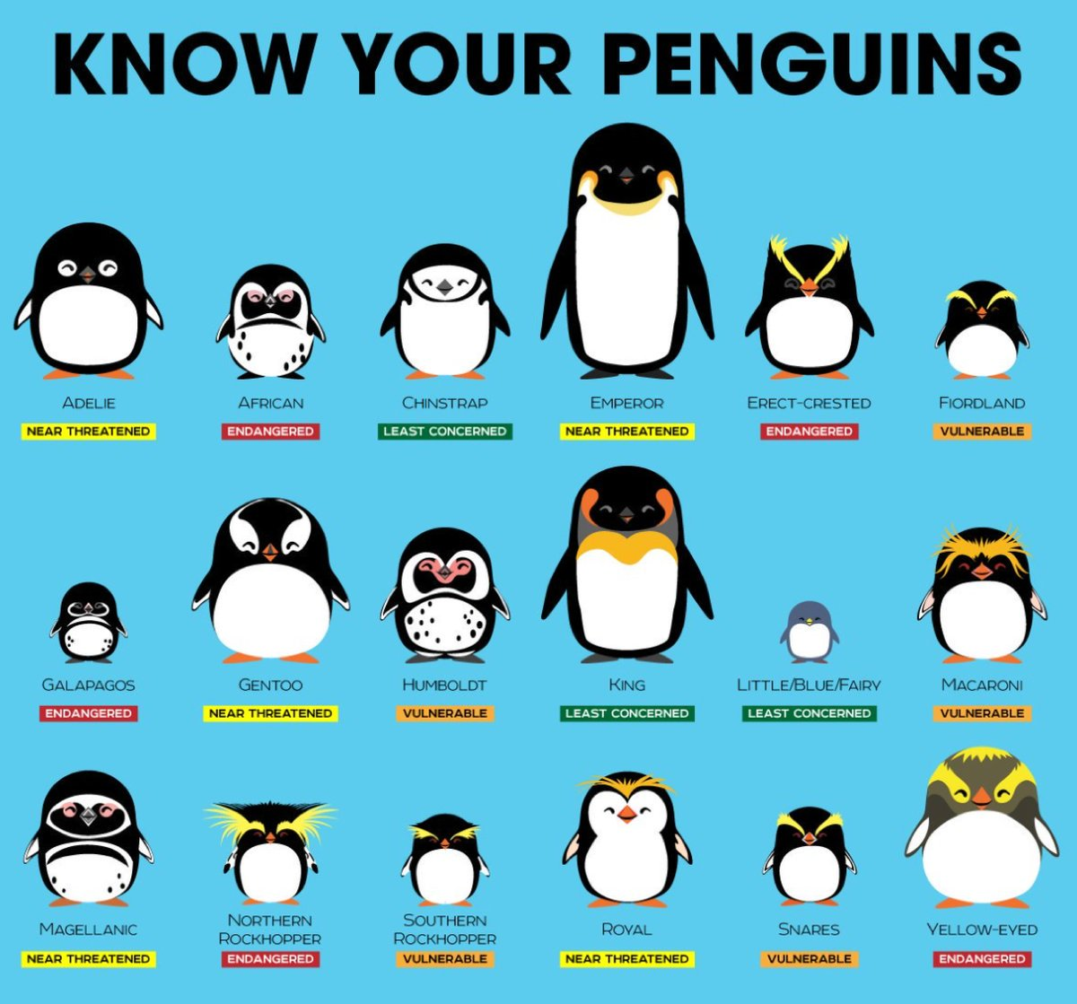 Happy World Penguin Day! Know your penguins! 18 different species, all found in the Southern Hemisphere, though the Galapagos lives on the Equator. The Emperor is the tallest at more than 1m. Many are threatened or endangered #WorldPenguinDay #penguins pic @PepomintNarwhal