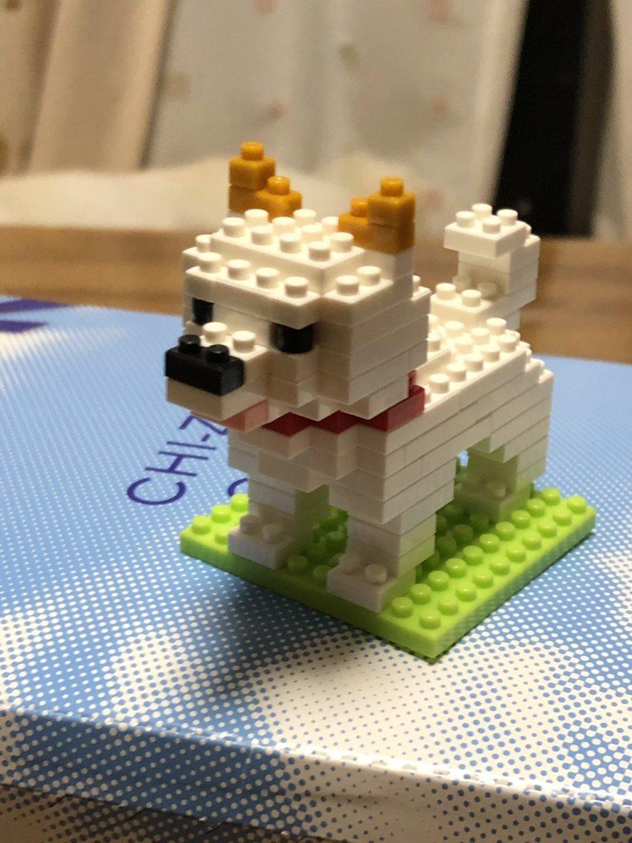 test ツイッターメディア - お父さんが僕を作ってくれました! #柴犬 #白柴 #ダイソー https://t.co/vNxD6OUA5Y