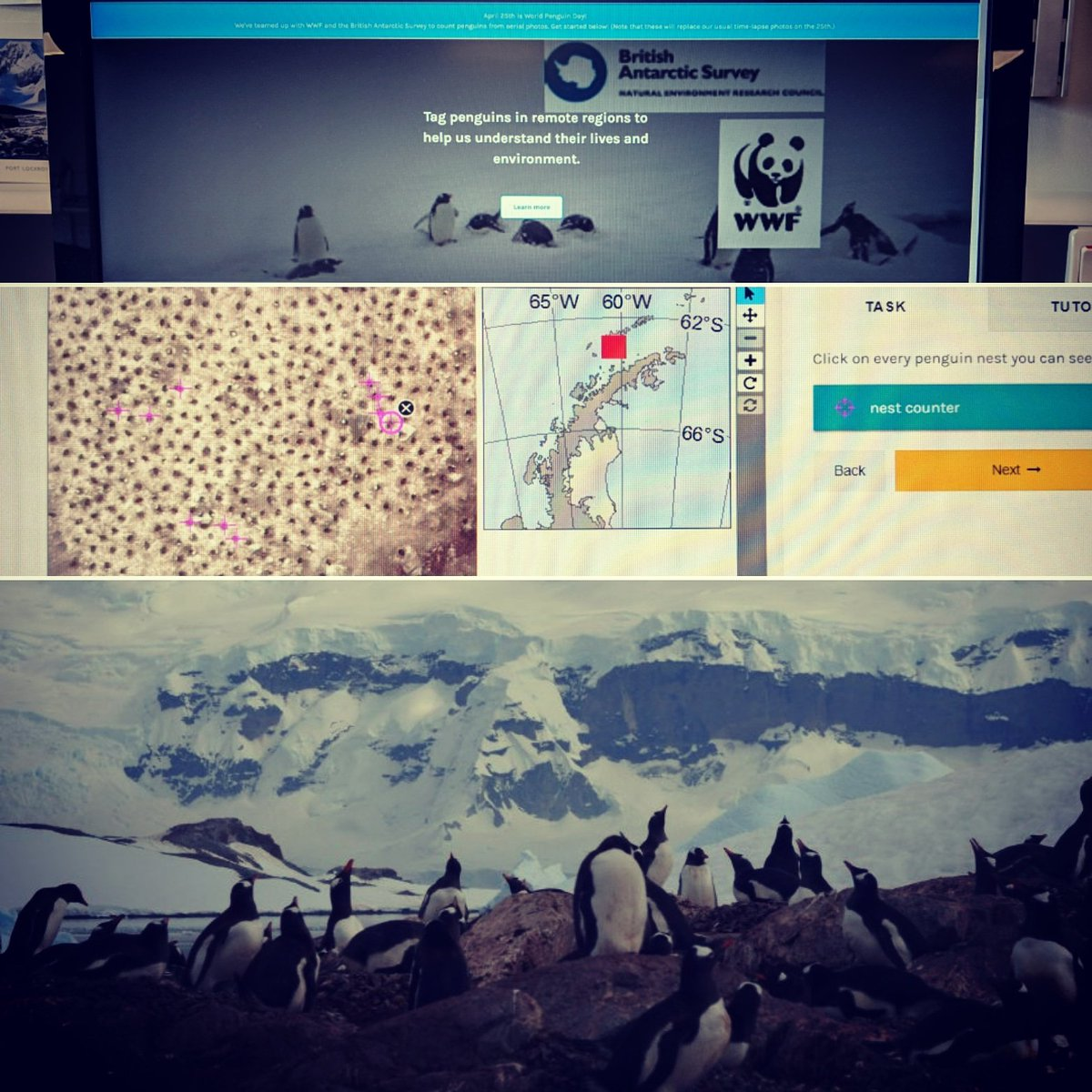 40634e3760c Media Tweets by Penguin Watch ( penguin watch)