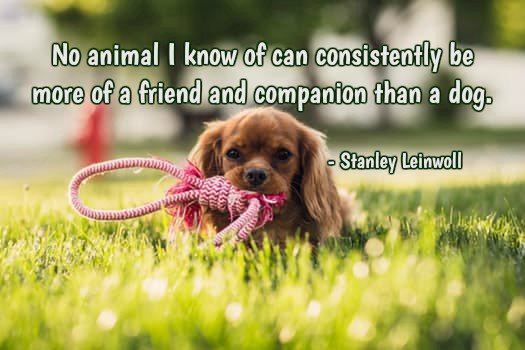 No animal I know of can consistently be more of a friend and companion than a dog.—Stanley Leinwoll #quote<br>http://pic.twitter.com/JpgzRAL4ug