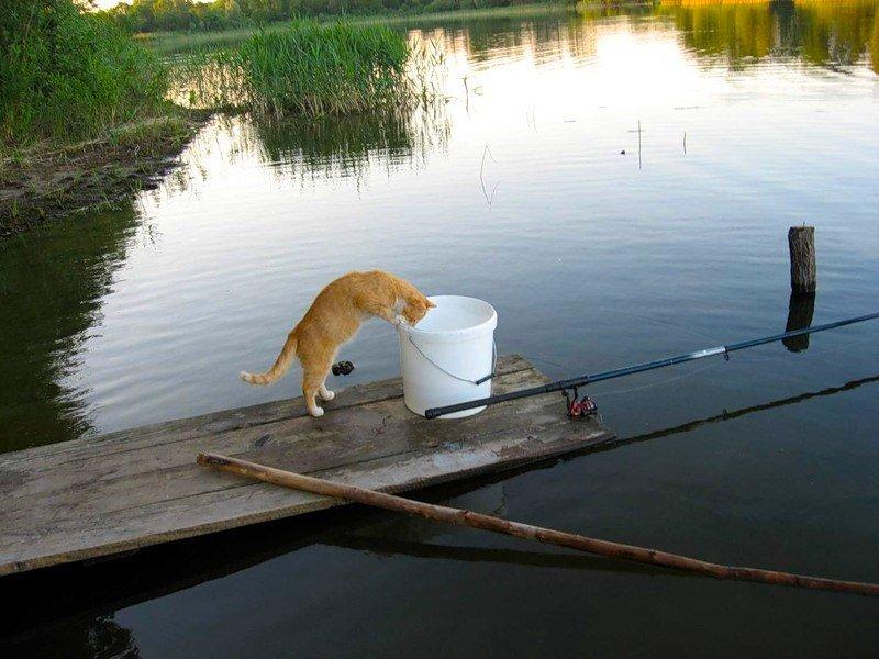 Что делать, когда твоя рыба не клюет
