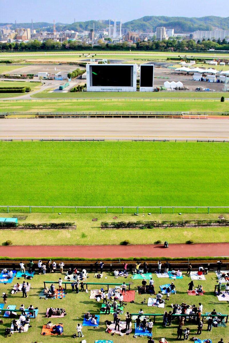先週行った東京競馬場! 芝が綺麗すぎる
