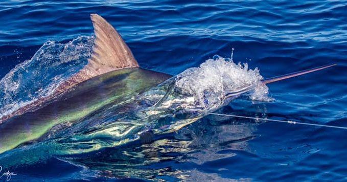 Cape Verdes - Hooker went 2-2 on Blue Marlin (650).