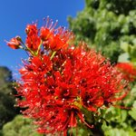 Image for the Tweet beginning: Blooms inside the Golden Gate