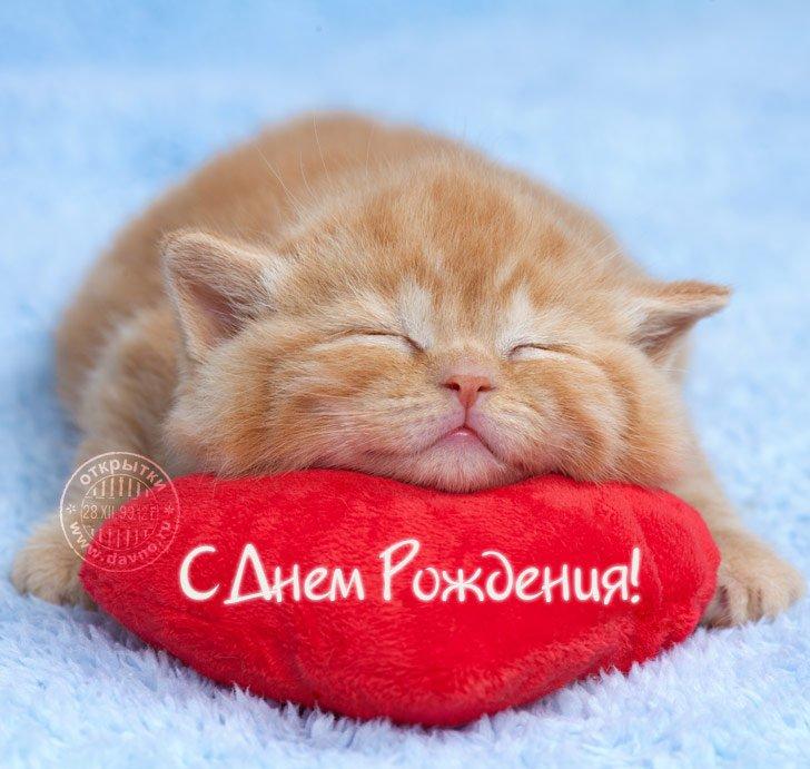 Картинка с днем рождения рыжий кот