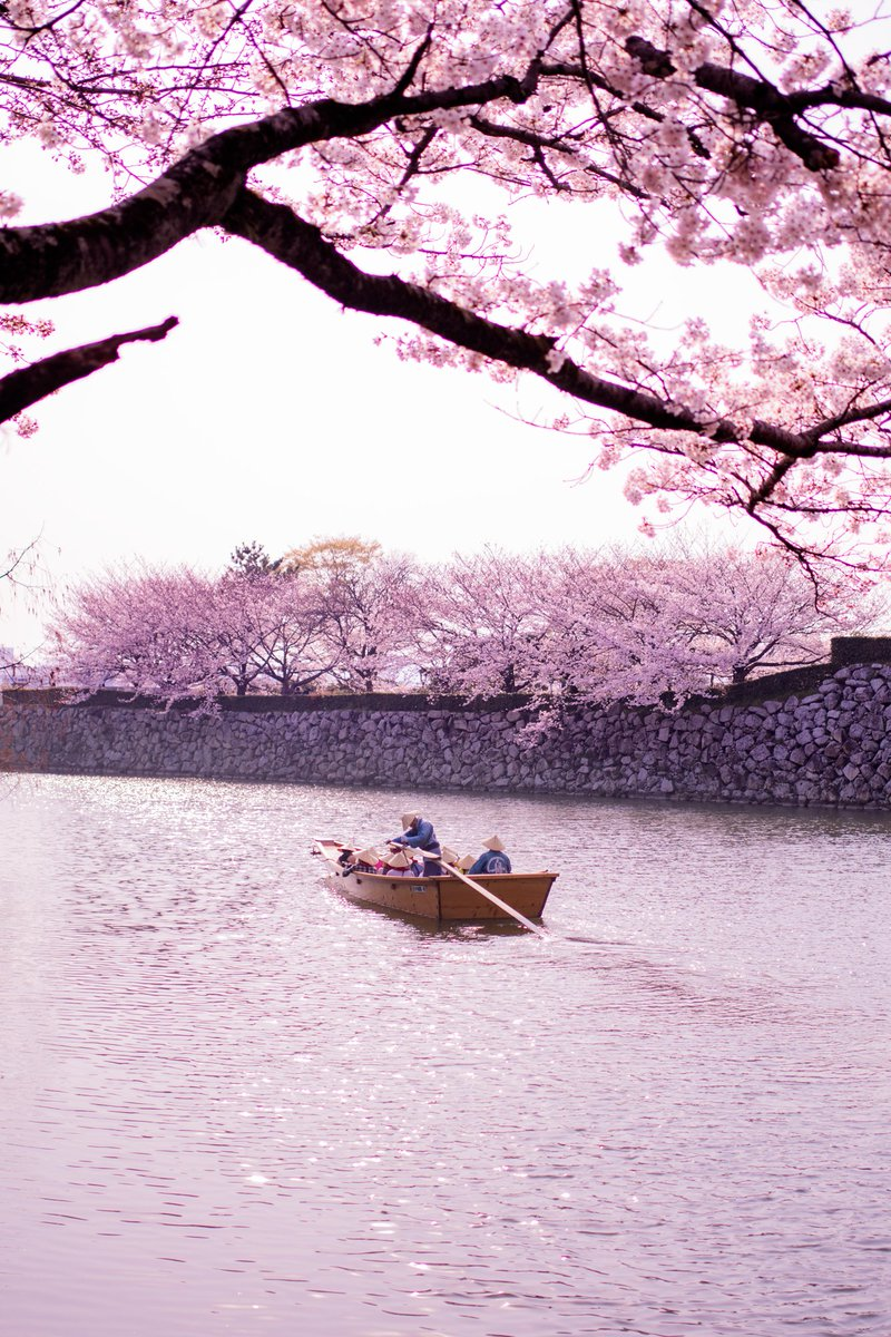 RT @kobazou_photo: 今年最後の桜  #ペンタックス #PENTAX https://t.co/wjcxMFkmij