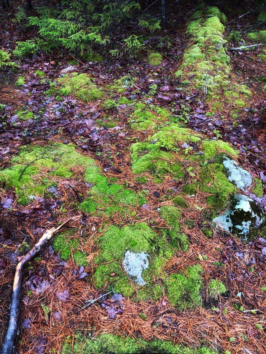 #Acadia #Maine #Forest https://t.co/OTqKwnwvXp