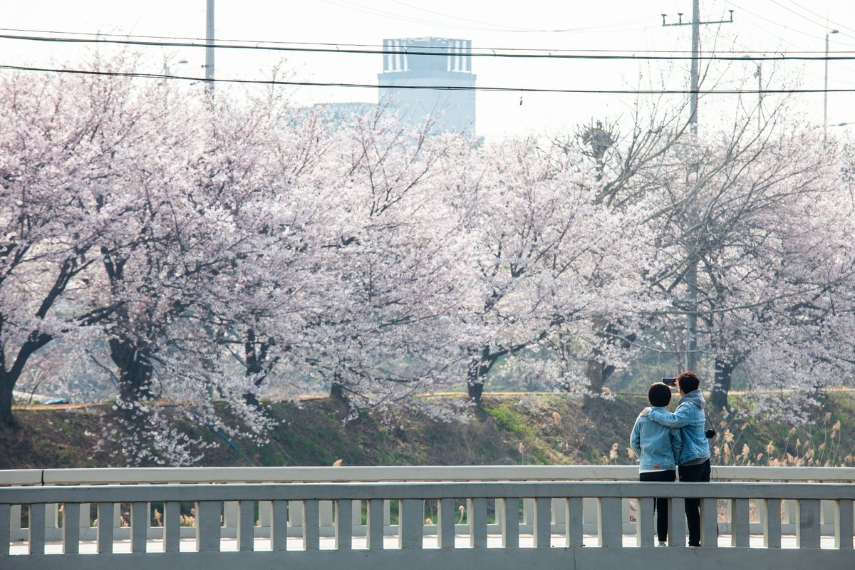 사람들은 즐겁다 / 201904 / 수원 황구지천  #happy #people #suwon #hwanggujicheon #70200mmf4 #canon80d https://t.co/muzCKa8XBR