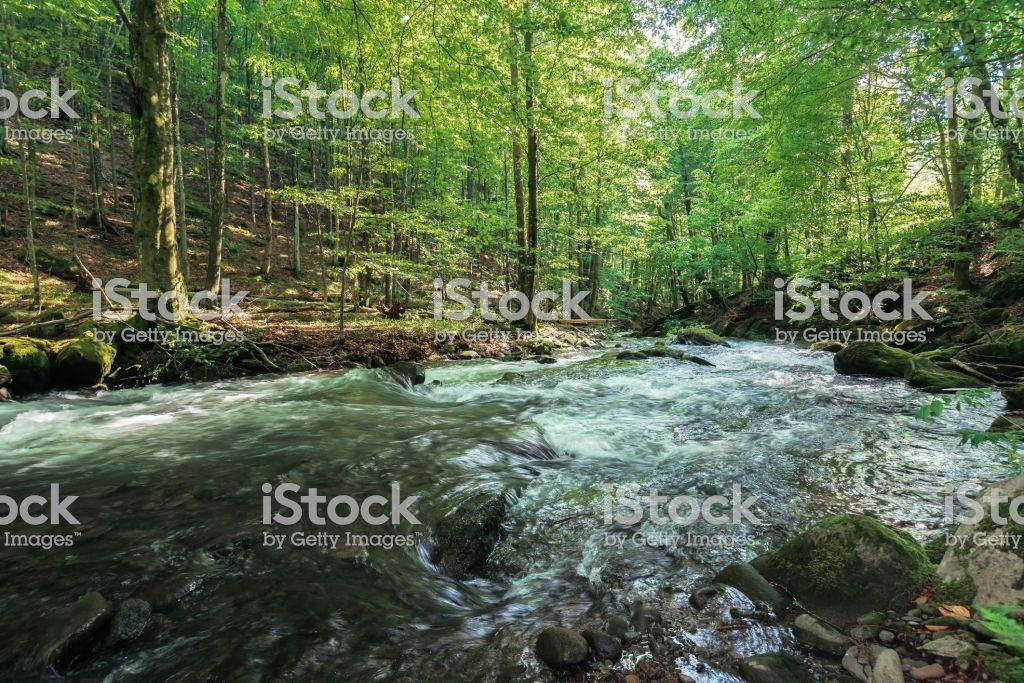 #Rapid #river in the ancient #beech #forest https://t.co/agTNDJEKRO https://t.co/5uKVMagChr