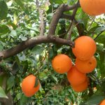 Image for the Tweet beginning: Huelga en Organic Fruit tras