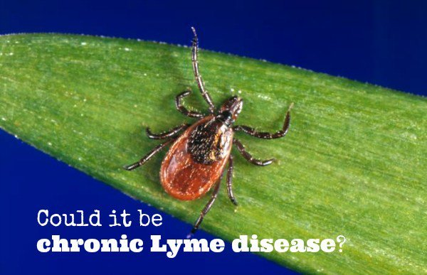 """test Twitter Media - """"Tick Season"""" Lyme Disease  The CDC has recognized that Lyme Disease is the fastest growing disease in America. Many doctors think the only way you can get lyme disease is if you get a tick bite and get a rash but this is not true!    https://t.co/dz1HhwLeeU   #lymedisease https://t.co/9yxhuMcQxk"""